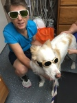 Cooper receives laser treatment for an injury at Dr. Waldo's office.