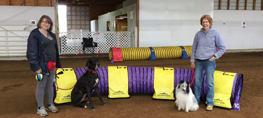 Flying Paws Agility Club